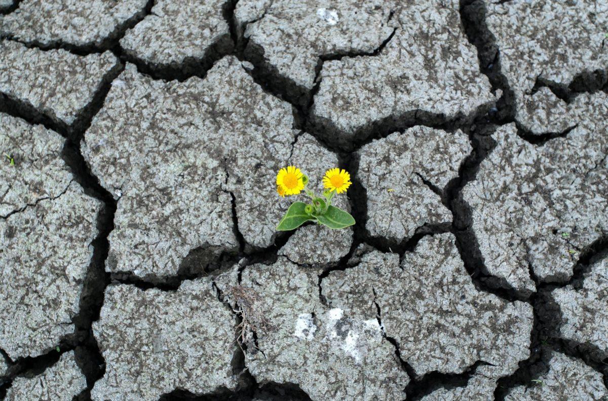 Yellow flowers grow between dry rocks